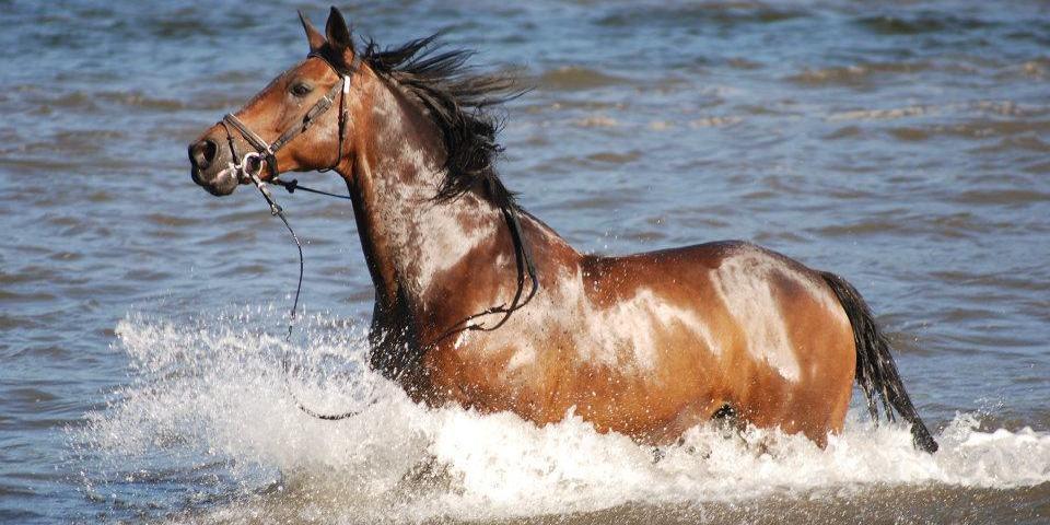 ¡Un centro de equitación diferente!